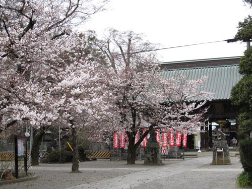2011.4.7妻沼聖天様本堂前