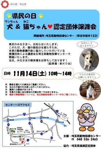 2020.11.14犬&猫ちゃん認定団体譲渡会