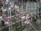 2007.3.19中央公園 千代鶴姫