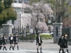 2010.4.18熊谷女子高校のしだれ桜